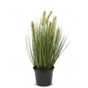 Roślina Dekoracyjna